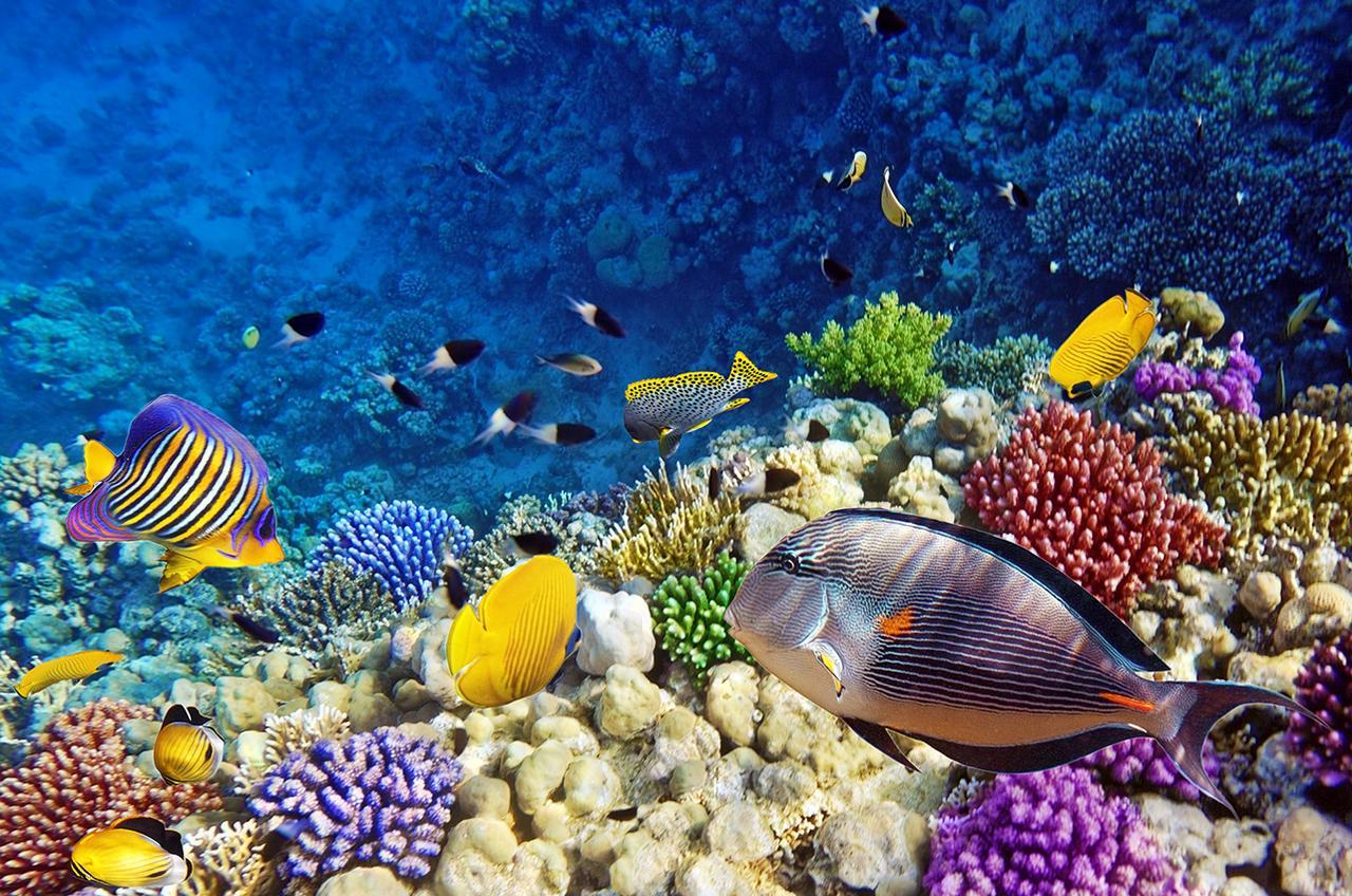 картинки красного моря египет недавно америке был