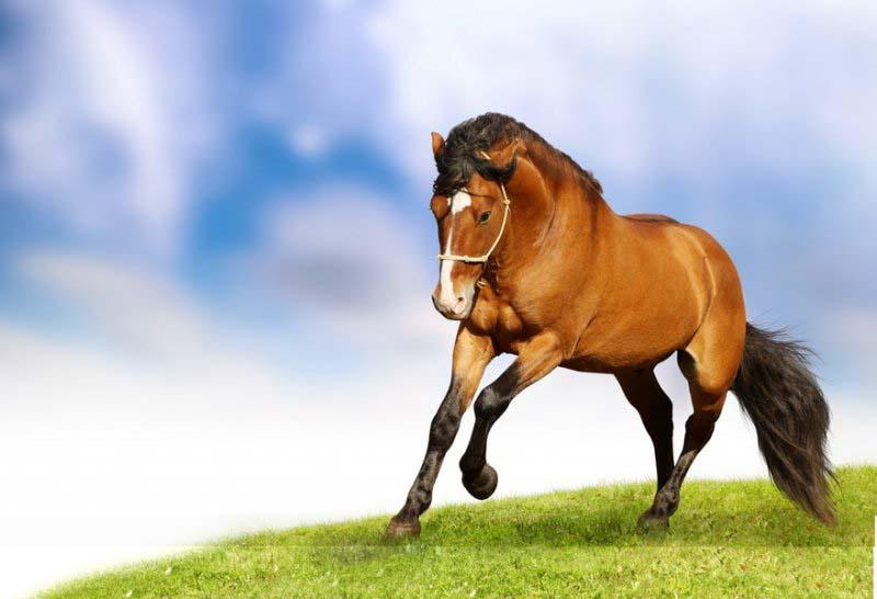 постер бегущая лошадь продаже