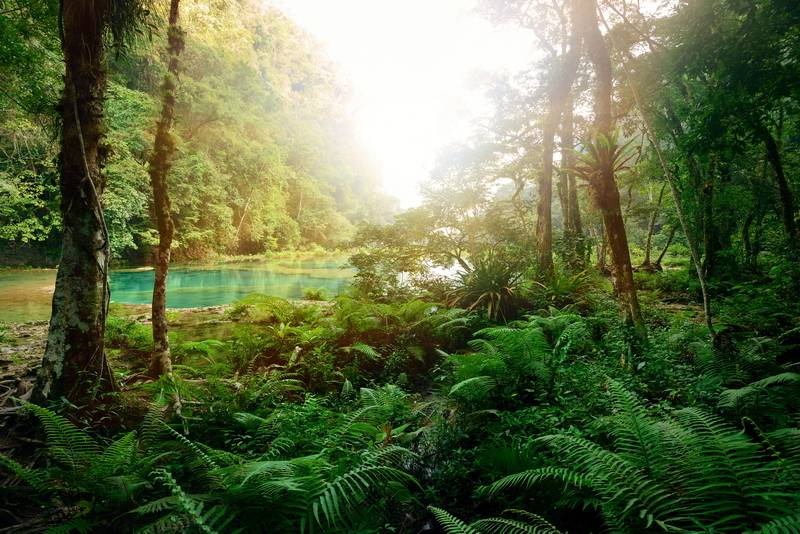 research paper on tropical forests Working paper 380 october 2014 ecosystem services from tropical forests: review of current science abstract tropical forests exert a more profound influence on weather patterns, freshwater.