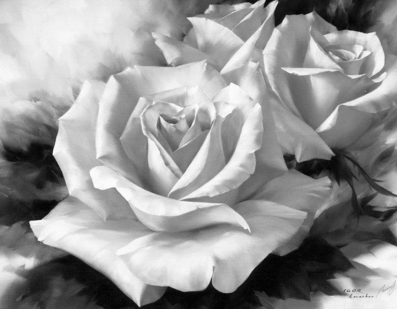 розы картинки черно-белые