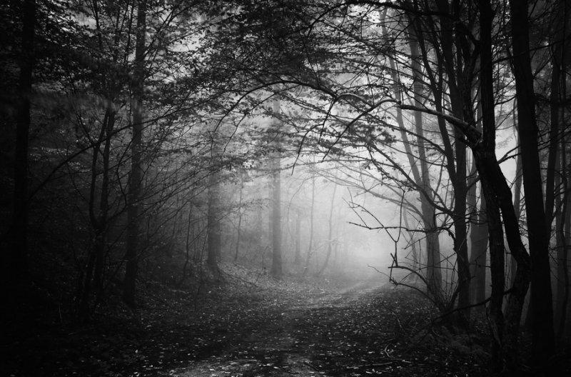 лес чёрно-белые картинки