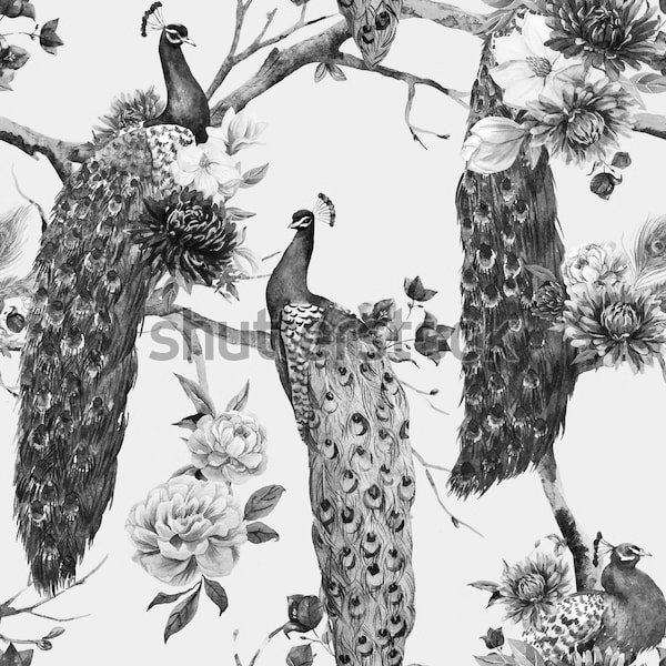 фото рисунок черно белый павлина