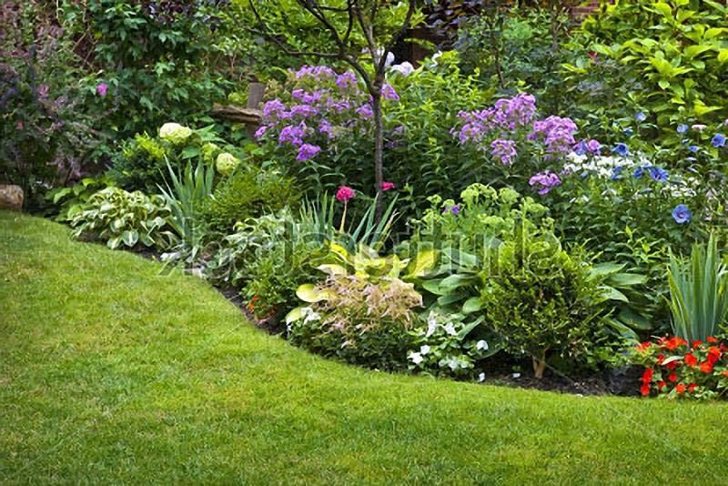Неприхотливые цветы в саду с
